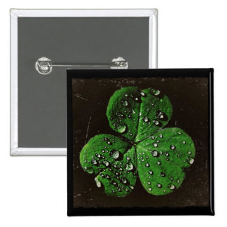 A Dew Covered Shamrock Pins