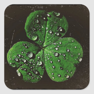 A Dew Covered Shamrock Square Sticker