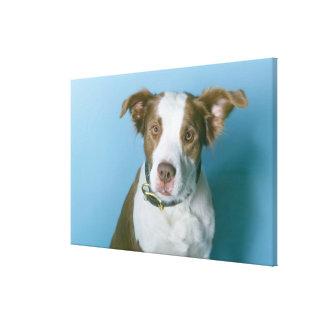 A dog canvas prints