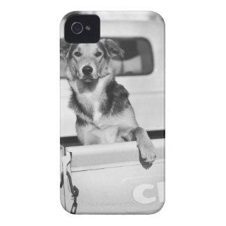 A dog in a car. Case-Mate iPhone 4 case