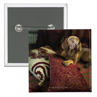 A dog lying on pillows pin