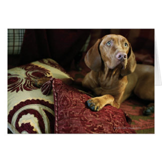 A dog lying on pillows. card