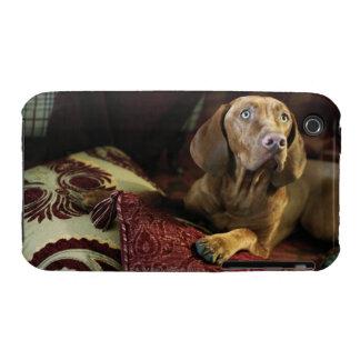 A dog lying on pillows. iPhone 3 covers