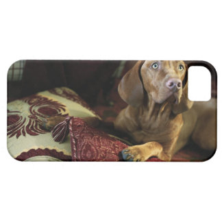 A dog lying on pillows. iPhone 5 covers