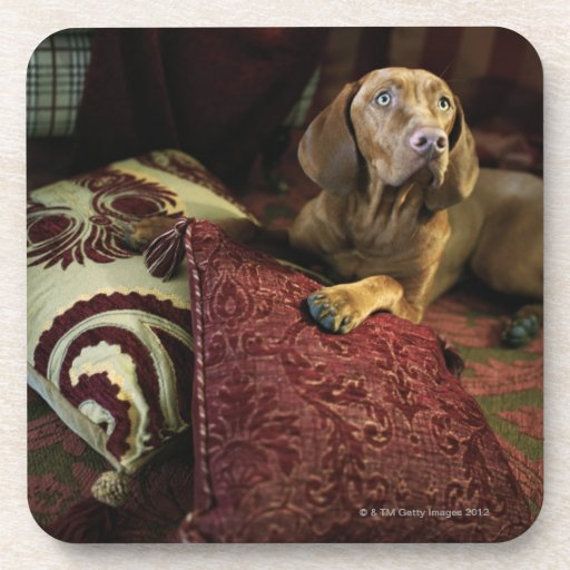 A dog lying on pillows. coasters