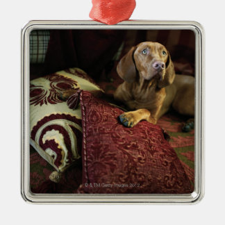 A dog lying on pillows. christmas ornaments