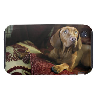 A dog lying on pillows. iPhone 3 tough covers