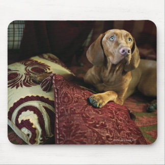 A dog lying on pillows mouse pads