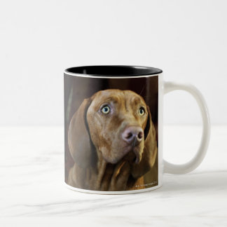 A dog lying on pillows. mugs