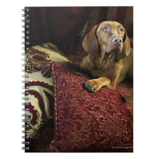 A dog lying on pillows notebooks