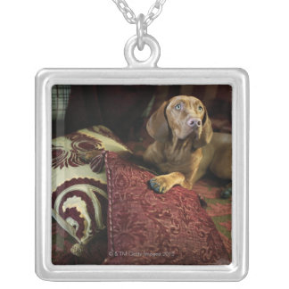 A dog lying on pillows. silver plated necklace