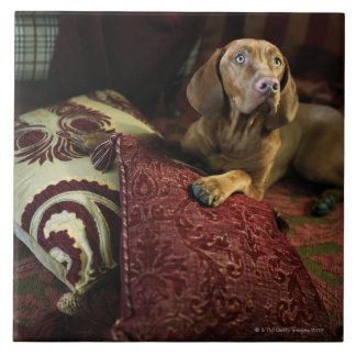 A dog lying on pillows. tile