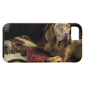 A dog lying on pillows. tough iPhone 5 case