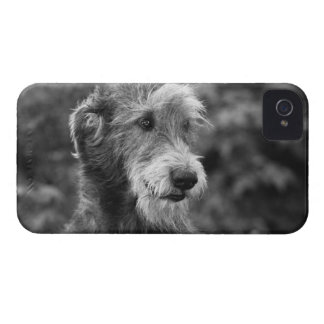 A dog outside. iPhone 4 covers