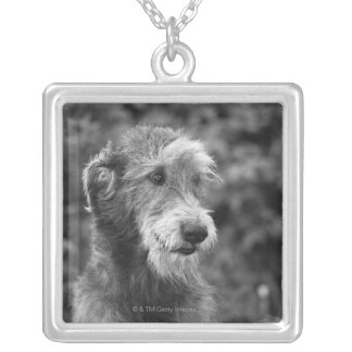 A dog outside. silver plated necklace