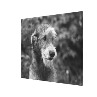 A dog outside. stretched canvas print