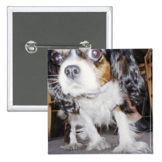 A dog sniffing close-up. 15 cm square badge