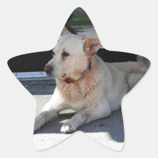 A Dog WIth Story Star Sticker