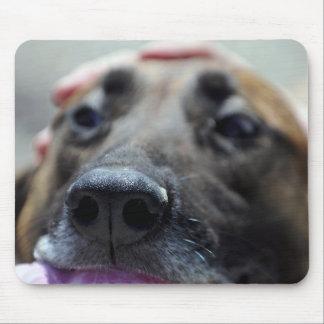 A Dogs Sense of Smell Mousepad