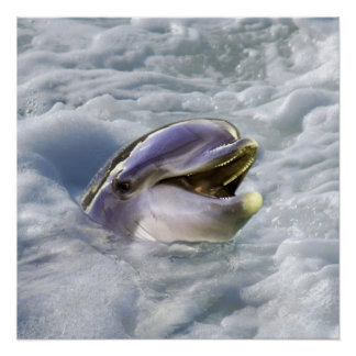 A dolphin's best smile poster
