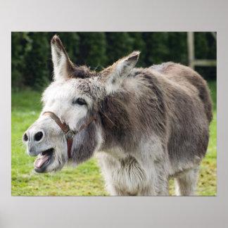 A donkey poster