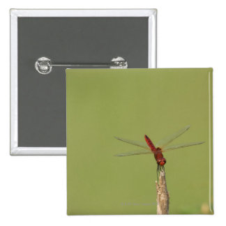 A Dragonfly rests momentarily on a dried weed 15 Cm Square Badge