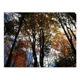 A fall hike in New York State Postcard