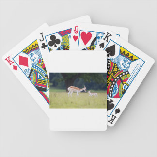A Fallow Deer (Doe) with Fawn Bicycle Playing Cards