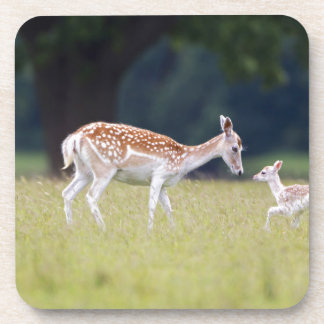 A Fallow Deer (Doe) with Fawn Coaster