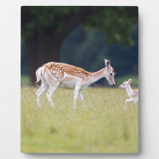 A Fallow Deer (Doe) with Fawn Plaque