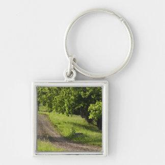 A farm road in Ipswich, Massachusetts. Key Ring