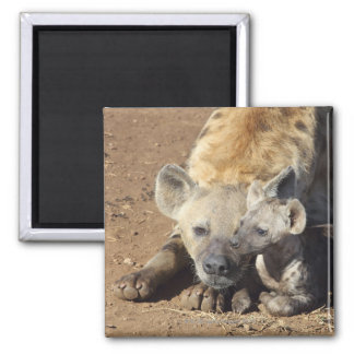 A female Spotted Hyena and her cub, Kruger Square Magnet
