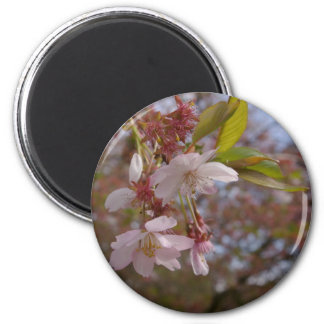 A Few Cherry Blossoms 6 Cm Round Magnet