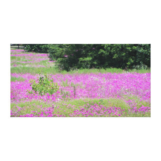 A field of pink spring wildflowers canvas print