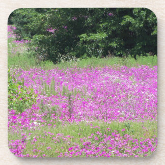 A field of pink spring wildflowers coaster