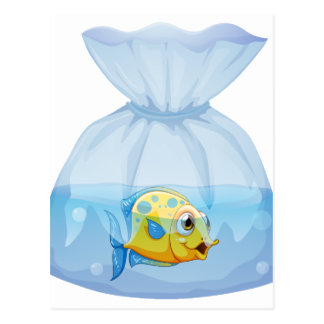 A fish inside the plastic pouch postcard