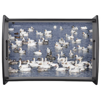 A Flock of Snow Geese at the Beach Serving Tray