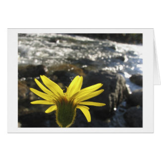 A Flower's View of Woods Creek Card