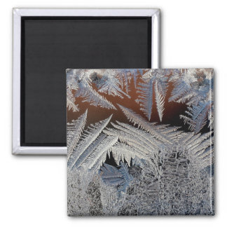 A forest of ice crystals magnet