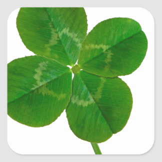A Four Leaf Clover Stickers