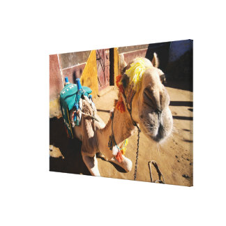 A friendly camel awaits its next rider, Cairo, Gallery Wrap Canvas