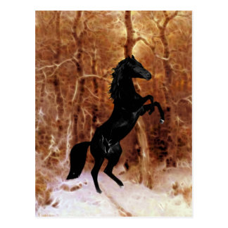 A friesian in winter snow postcard