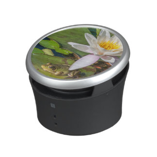 A frog under a flower of water lily speaker