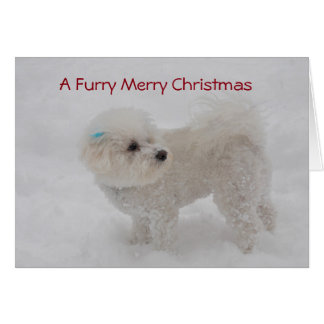 """A Furry Merry Christmas"" Bichon Card"