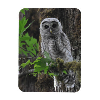 A Fuzzy Baby Barred Owlet Magnet