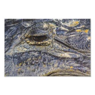 A Gator's Eye Photo