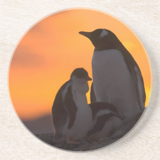 A gentoo penguin adult and chick are silhouetted coaster
