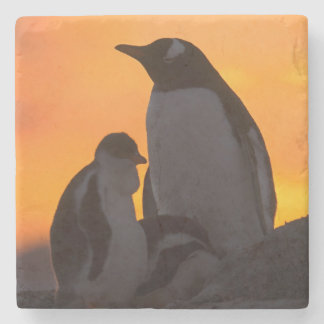 A gentoo penguin adult and chick are silhouetted stone coaster