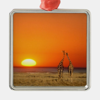 A Giraffe couple walks into the sunset, in Metal Ornament
