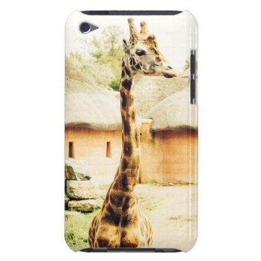 A Giraffe In An African Village, Animal Photograph iPod Touch Case